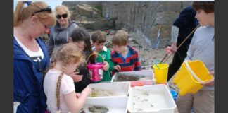 Rock pool picture with kids