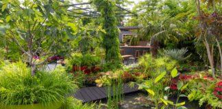 B&Q Bursting Busy Lizzie Garden