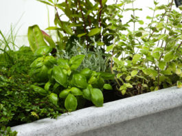 A raised planter
