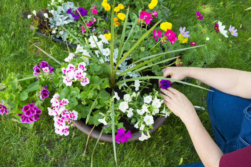 Planting Containers with Flowers - www.gromor.ie